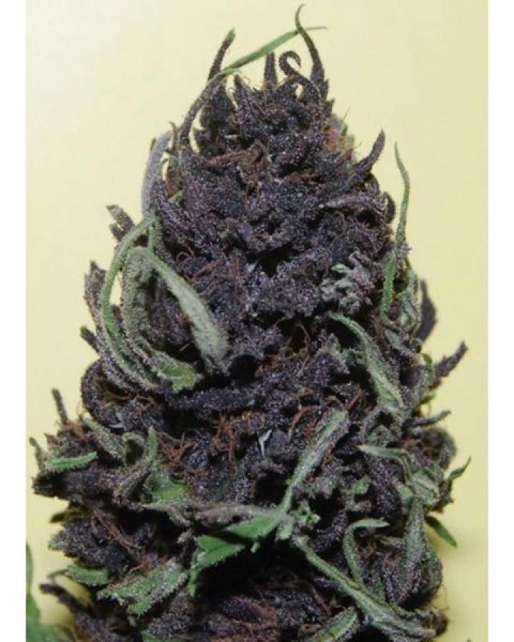 Photo #mmj #w420 #420 #710 #cannabis #marijuana #mmjgirl…
