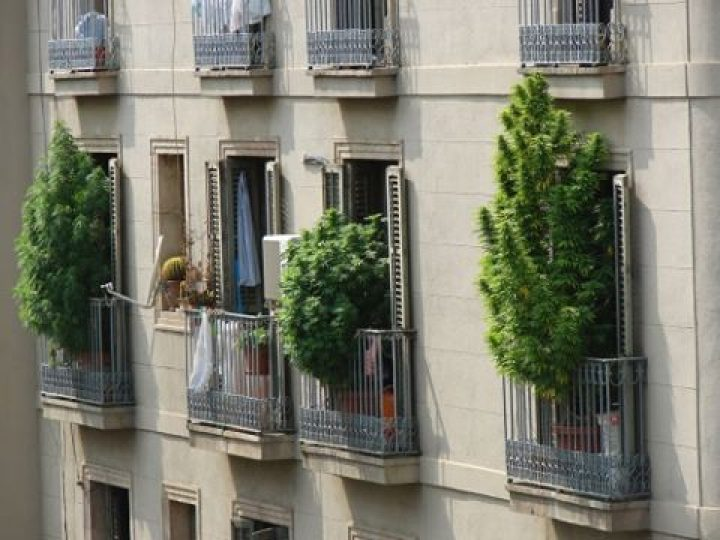 This is NOT a stealth grow! #mmj #w420 #420 #710 #cannabis #marijuana #mmjgirl…